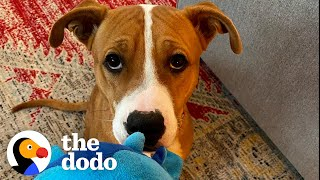 This Puppy Has Never Lived Inside | The Dodo Foster Diaries