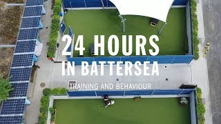 Training and Behaviour   24 Hours In Battersea