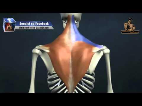 Massaggio con il video osteocondrosi seno