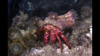 Atis Diving Club, vacanza subacquea Isola d'Elba.