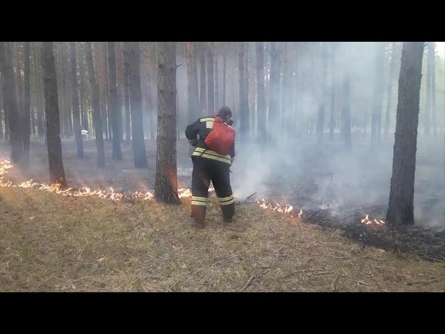В Ангарске подожгли лес