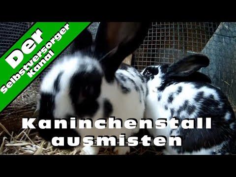 Kaninchenstall ausmisten