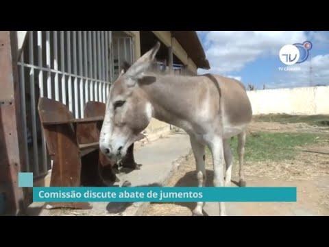 Comissão discute abate de jumentos - 04/12/19