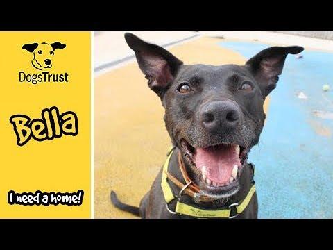 Meet Bella! | Manchester