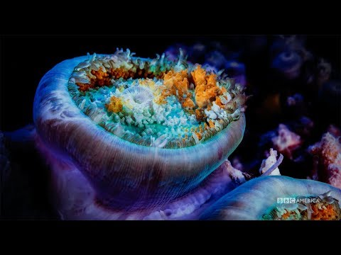 Planet Earth: Blue Planet II | Premieres Saturday, January 20 @ 9/8c on BBC America
