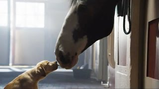 Secrets of the Super Bowl Budweiser Puppy Commercial