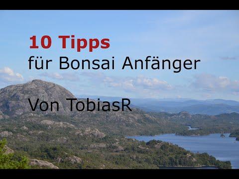 10 BONSAI Tipps für Anfänger [DEUTSCH][HD]
