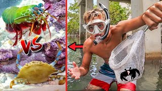 CATCHING LIVE CREATURES TO FEED MANTIS SHRIMP!! *epic*