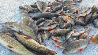 Рыбалка с братом. Ловля окуня  раритетными удочками на БАЛДУ. My fishing
