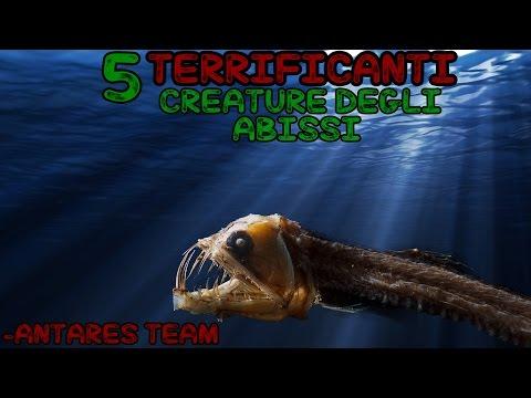 Che trattano parassiti il pesce