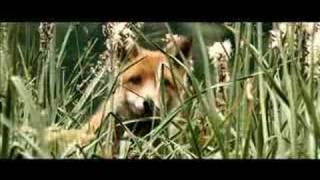 Der Fuchs und das Mädchen Film Trailer