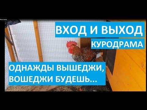 """Юмористическое кино о курочках-несушках доминантах """"Вход и выход"""""""