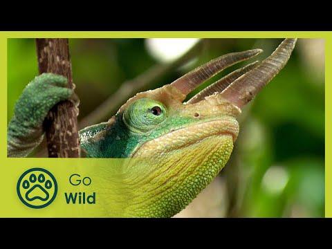Chameleon Pi Secrets Of The Kindness