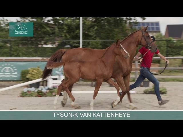 TYSON K VAN KATTENHEYE