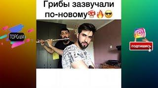 TOPGraM - Музыкальная Подборка - Грибы запели по новому  До мурашек [Выпуск 7] Vine - сентябрь 2017