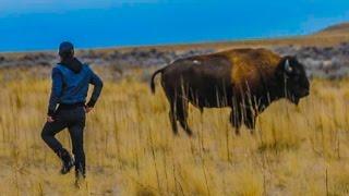 RIDING A WILD BISON! (INCREDIBLY DANGEROUS!!!) w/ Shonduras, Corey Scherer, Sam & Colby!