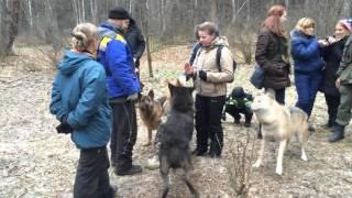 Волки и люди