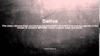 Medical vocabulary: What does Saliva mean