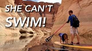 Paddle Boarding Lake Powell Canyons with Our Dogs in Page Arizona