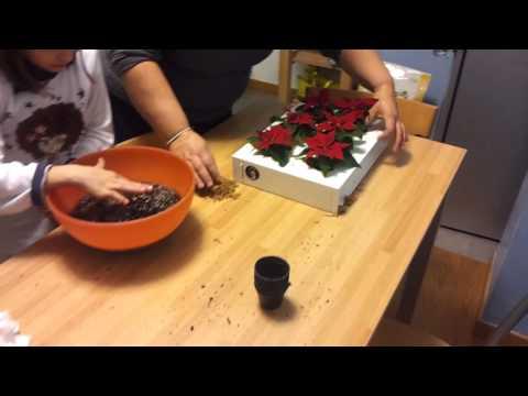 Video Ortisgreen Obraz z živých rostlin HOH! TRIO SMART neosázený, bílá 2