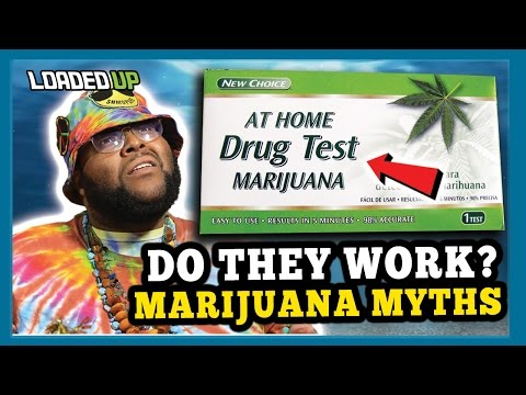 Marijuana Myths Do Weed Drug Tests Work? How to Get weed out of your system fast