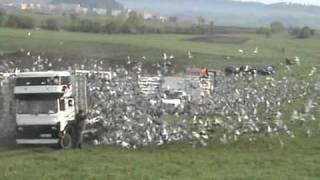 Lansare Prahova FCPR - 20.000 porumbei