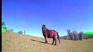 Drone freestyle FPV horse folow