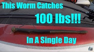 Bass Fishing Plastic Worms: 100lbs of Bass In Single Day