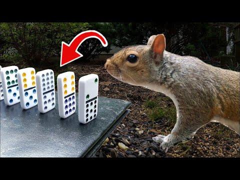 Squirrel Sets Off Chain Reaction, Reaps Reward