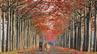 シャンソン枯葉LesFeuillesMortes&AutumnLeavesVer.1~2ジュリエット・グレコ&イヴ・モンタン/訳詞初稿Sima