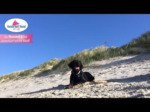 Reiseführer Urlaub mit Hund auf Borkum – Mit dem Vierbeiner zur Nordsee!
