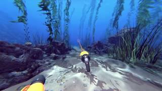 Operation Apex - Lure Black Sea Bass