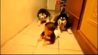 Hai chú chó tập bò theo em bé thật dễ thương