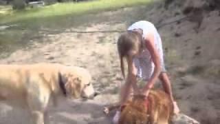Girl & Dog Grapple.WMV