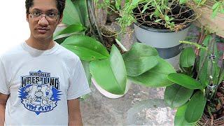 HIS VIETNAMESE GIRLFRIEND !  / GARDEN at Summers End   Kenton & Habiba #familyvlog #garden