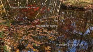紅葉の沼地