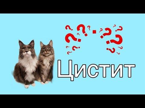 Цистит и мочекаменная болезнь у кошек//ПРИЧИНЫ, ПРОФИЛАКТИКА, ЛЕЧЕНИЕ//