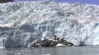 Kenai Fjords Tours, Alaska's # 1 Wildlife and Glacier Cruise