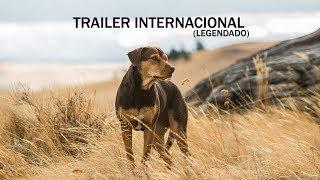 A Caminho de Casa; Veja o trailer
