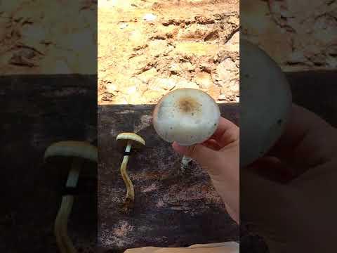 Como curará um fungo em um dedo da mão