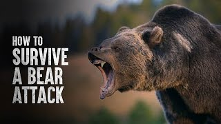 How to Survive a Bear Attack, According to Science