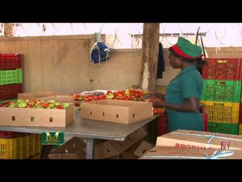 , title : 'Agriculture Perishables Export