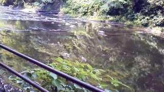 養老渓谷川遊歩道夏休み散歩道千葉県市原市観光スポット上流