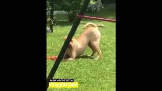 Kia – Video natečaj 2020 – Revija Moj Pes #Kia #MojPes