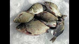 Зимняя рыбалка на карася в декабре