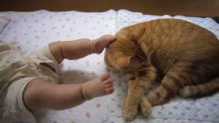 【ペット大好き!スゴ技】赤ちゃんキックに耐える猫