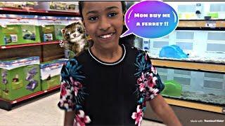 Mom Buy Me. A Ferret.😍🍄
