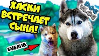 DOGVLOG: ХАСКИ ВСТРЕЧАЕТ СЫНА! Поход в собачий приют! Говорящая собака