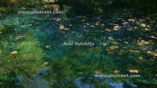 青池の動画素材, 4K写真素材