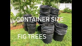 Container Sizes For FIG TREES